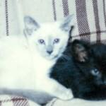 Mia and Kit