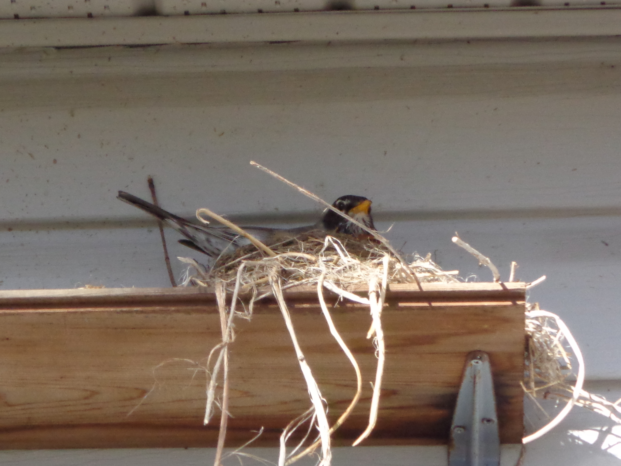 A Suitable Nest