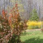 Golden Asparagus